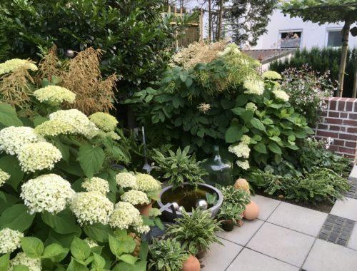 Weisser Garten 1